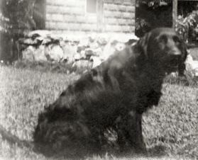 Nicky, our dog in Corydon, after Dottie